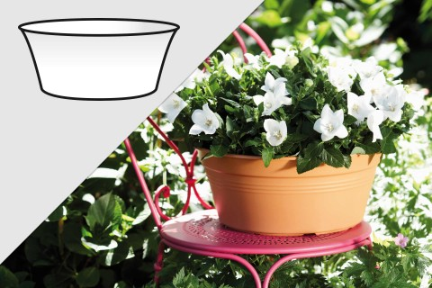 Plantenschalen kopen bij HORNBACH