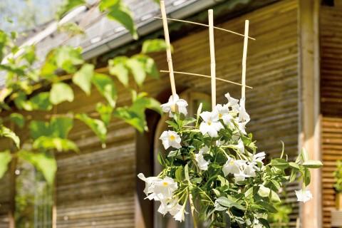 Plantenstok kopen bij HORNBACH