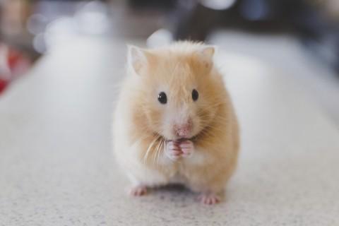 Hamstervoer kopen bij HORNBACH