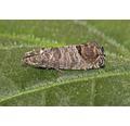 ECOSTYLE Aaltjes tegen larven van de buxusmot goed voor 20m²