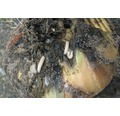 ECOSTYLE Aaltjes tegen larven van de uienvlieg goed voor 10-60m²