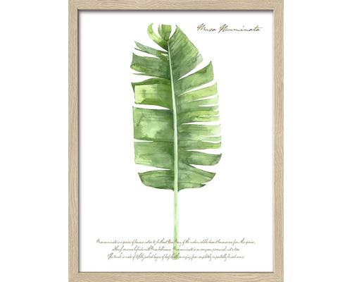 PURE LIVING Schilderij met frame Green Plant Leaf I 33x43 cm