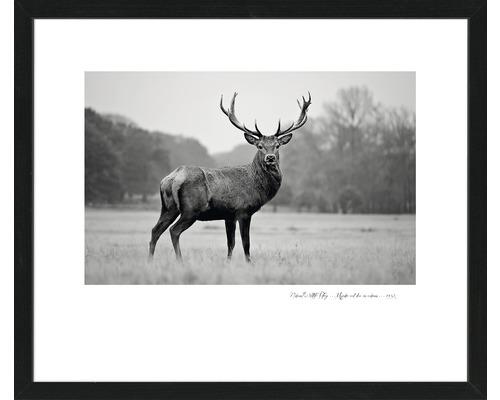 PURE LIVING Schilderij met frame Deer 55x65 cm