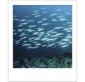 SELECTION StyleColor Muurverf kleur 12 Betoverende diepte 2,5 l